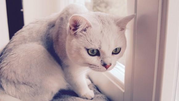 猫背だからストレッチというのは短絡的